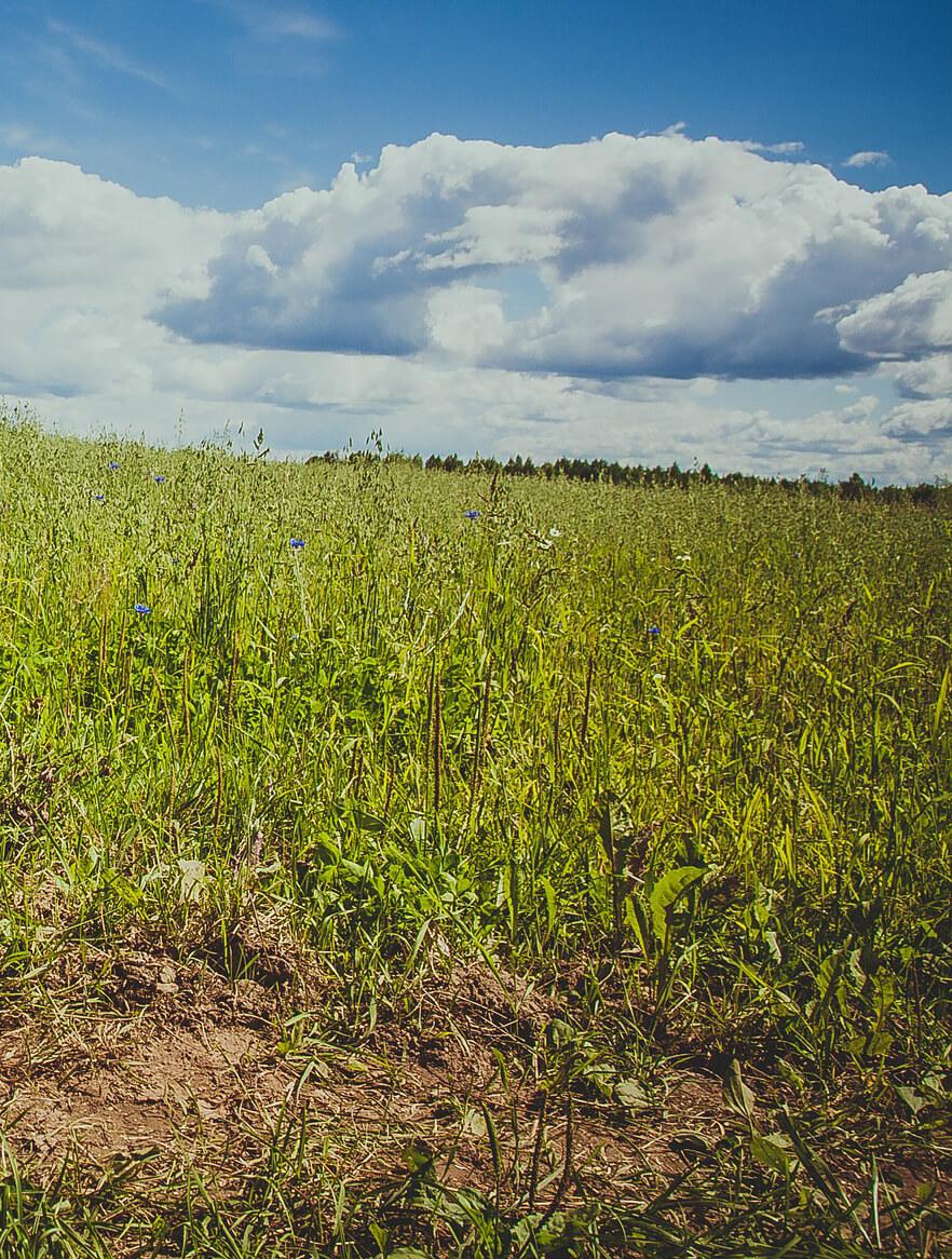 fűkaszálással helyreállíthatók az elhanyagolt zöld területek
